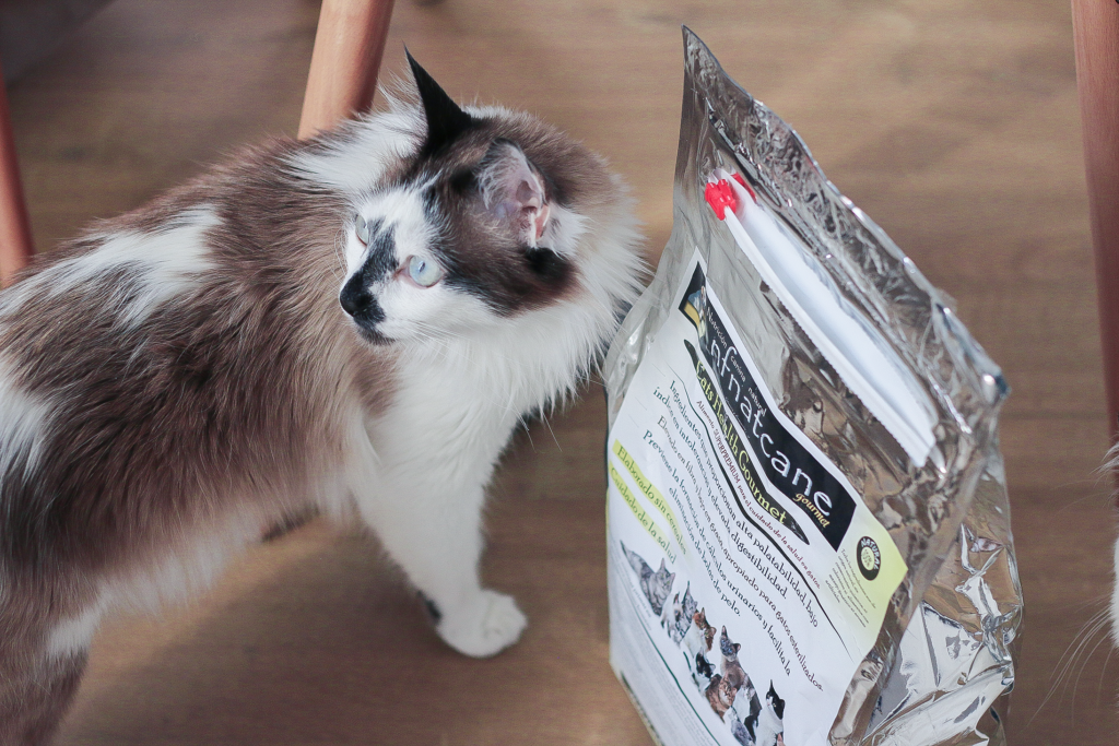 mejor pienso para gatos nfnatcane cats health gourmet