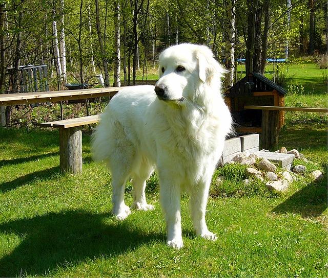 mejores perros pastores
