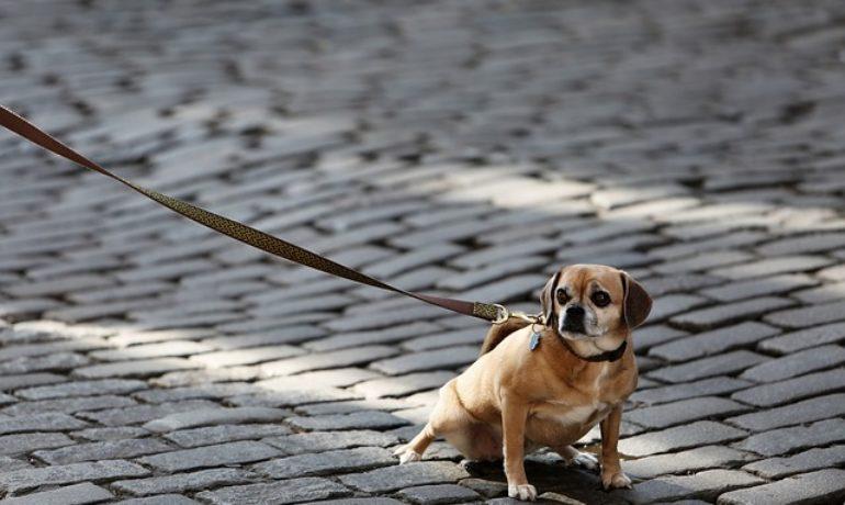 obligación de limpiar la orina de los perros en la calle