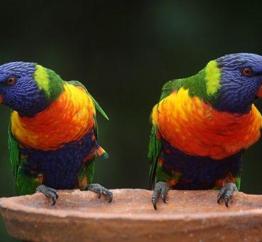 parásitos en los pájaros