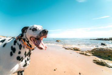playas para perros 2019