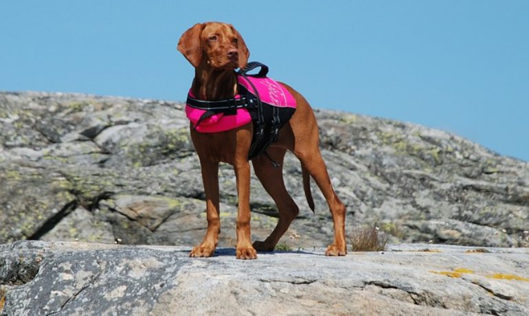 chalecos salvavidas para perros