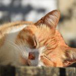 prevenir un golpe de calor en gatos