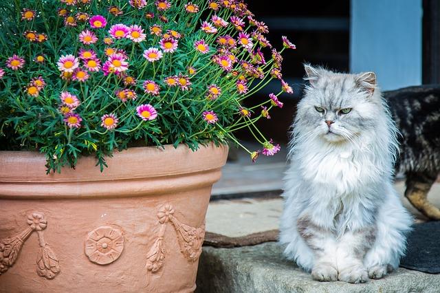síntomas del estrés en gatos