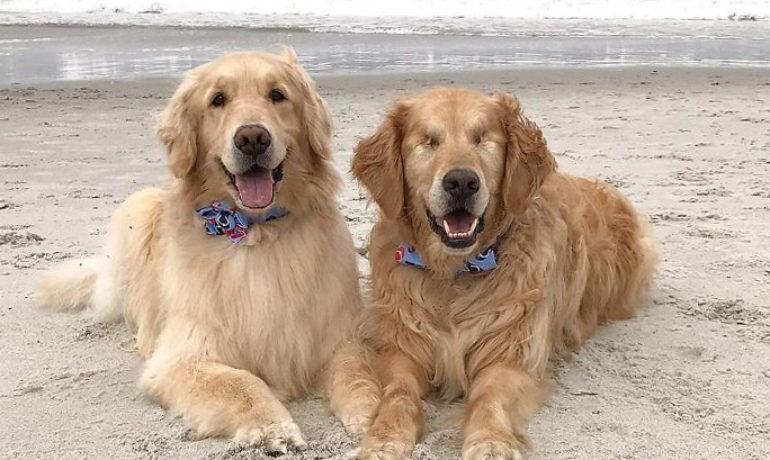 jake el perro ciego y addie