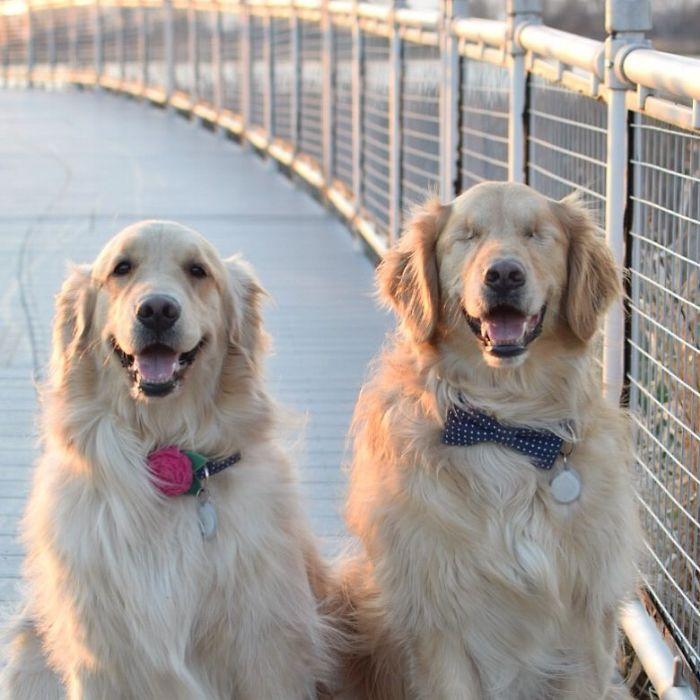 perro ciego con su perra guía