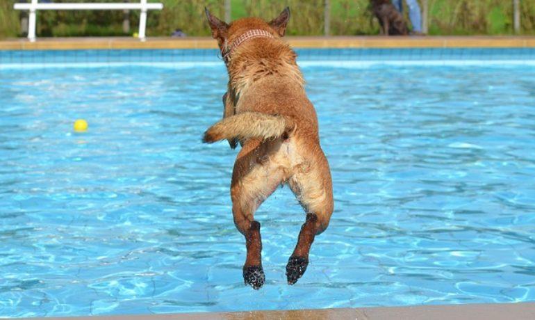 perro a la piscina
