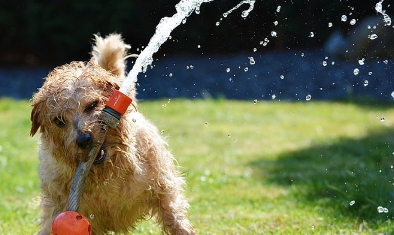 consejos guardia civil para mascotas