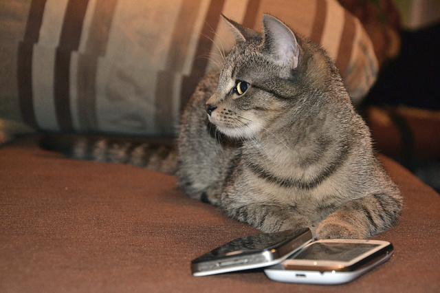 apps para gatos