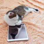 apps para gatos cómo son y qué beneficios tienen
