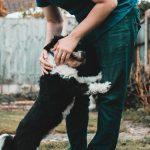 cómo saludan los perros a las personas