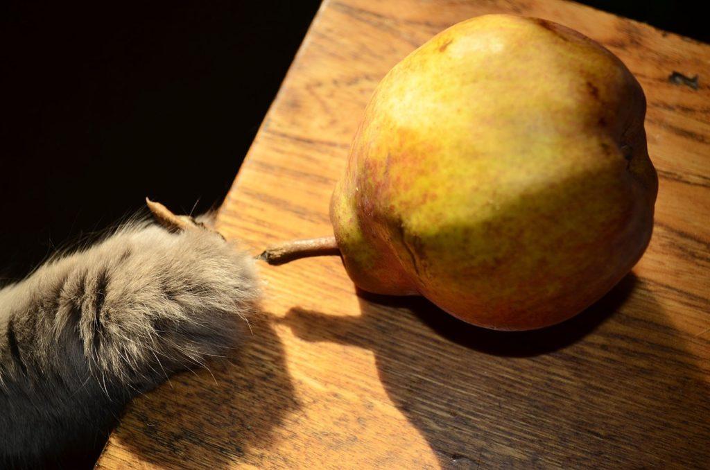 frutas para gatos