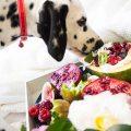 frutas prohibidas para perros