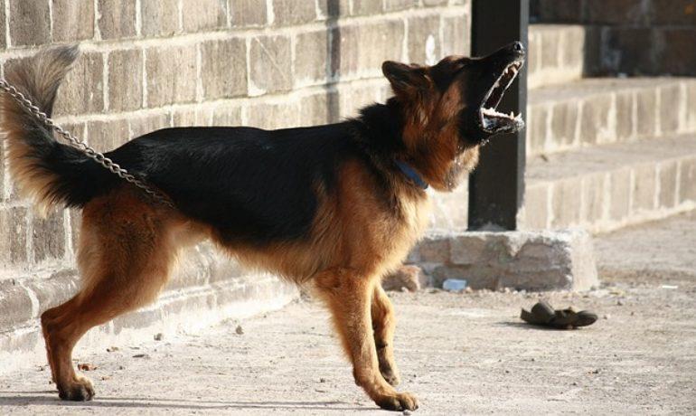 mi perro está enfadado motivos