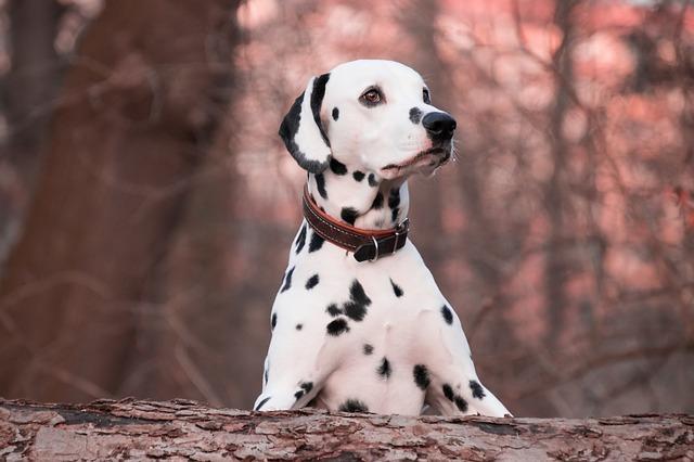 collar o arnés para perros