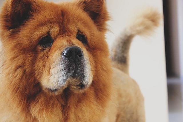 limpiar el pelo suelto de las mascotas