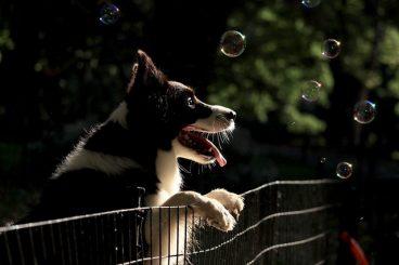 entretener a un perro