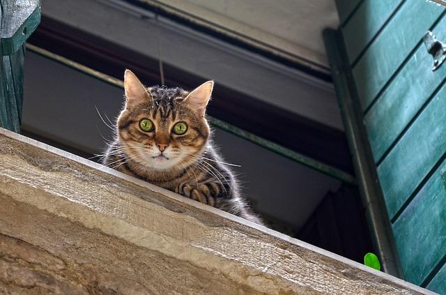 cómo sobreviven los gatos a las caídas altas