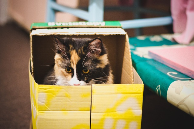 mudanza con gatos