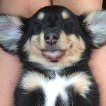 Fotos de perros durmiendo en posiciones muy extrañas