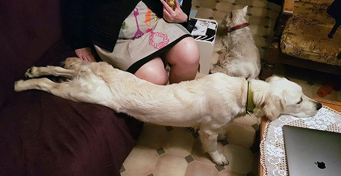 perros durmiendo en posiciones graciosas