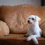 por qué mi perro muerde los muebles