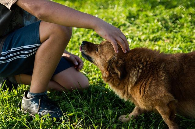 a qué le tienen miedo los perros