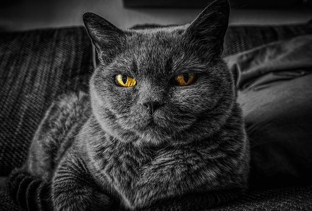ojos de los gatos