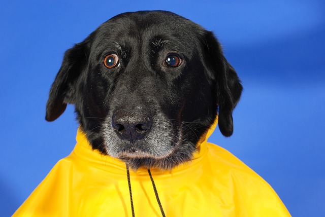 Enfermedades de las mascotas en épocas de lluvia