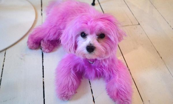 maquillar y teñir a las mascotas