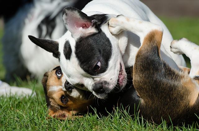 perros en el parque