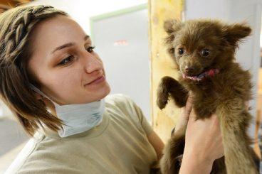 por qué los perros tienen miedo del veterinario