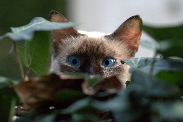 gato huele mal