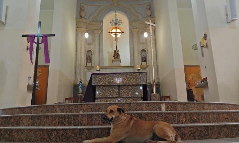 Funnily enough, this is not the first appearance of dogs and other animals in churches around the world. From a dog unexpectedly crashing church service in summer of this year (also in Brazil) to annual pet blessings during the St. Francis Day in honor of the Patron Saint of Animals, Saint Francis of Assisi – it seems that animals feel pretty comfortable in church. While serving the good cause, do you think it's something the holy places could adopt more often?
