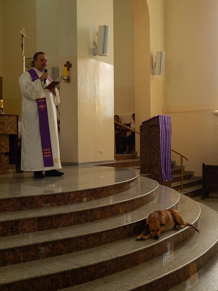 cura lleva a perros abandonados a la iglesia