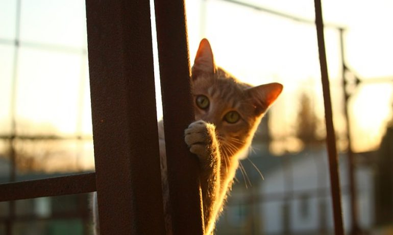 mi gato huele mal por que