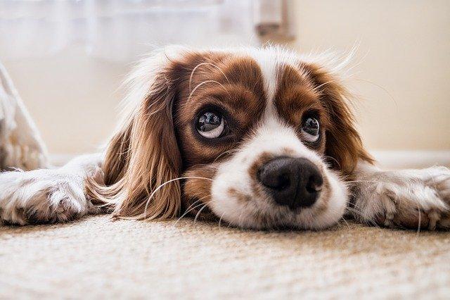 mi perros estornuda mucho