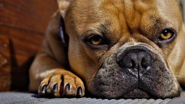motivos por los que mi perro estornuda mucho