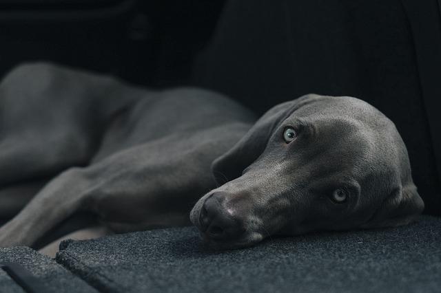 Ojo seco en perros