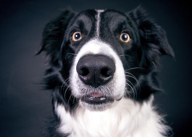 por qué mi perro estornuda mucho