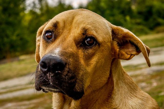 síntomas de fiebre en un perro más comunes