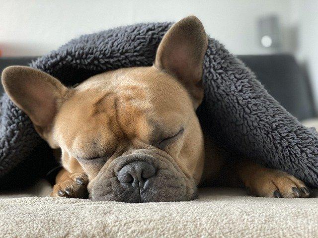a los perros les afecta el frío