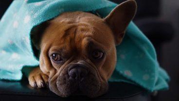 a qué mascotas les afecta más el frío