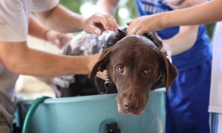 bañar a tu perro en invierno