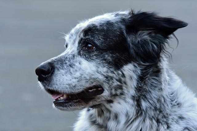 causas del picor de orejas en perros