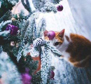 cómo hacer que el gato no destroce el árbol de navidad