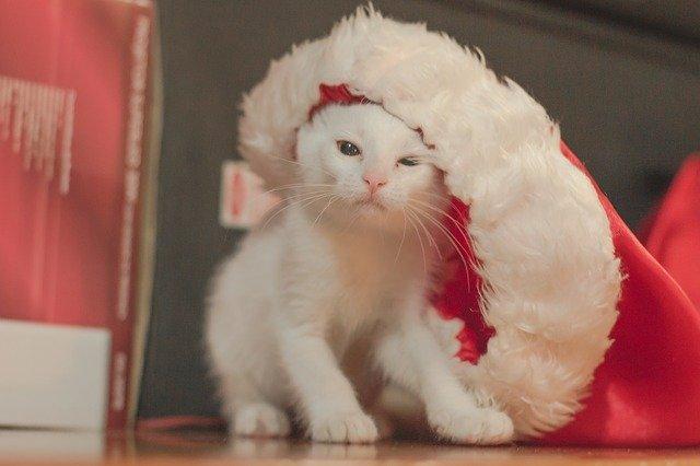 cuida a las mascotas en navidad
