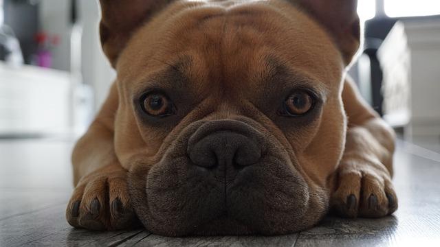 cuidados de los ojos de tu mascota más importantes