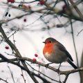 cuidados de los pájaros en invierno