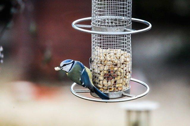 cuidados de los pájaros en invierno en su alimentación